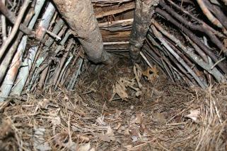 My debris hut at the advanced standard class at trackerschool