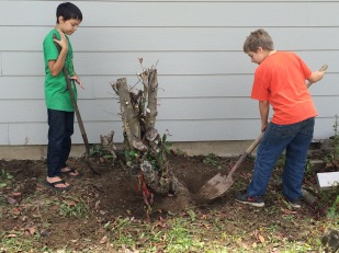 The boys feel pretty big taking out that stump