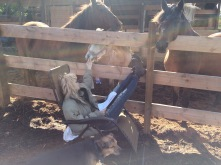 Cheryl studying in the company of the horses