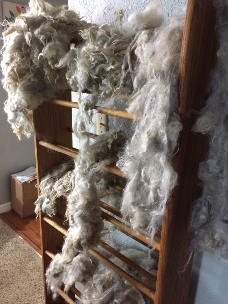 Alpaca wool drying after washing
