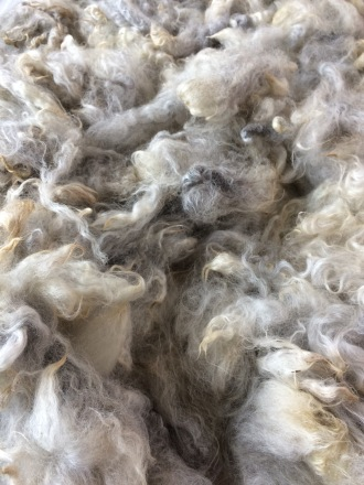 Alpaca wool washed and fluffy