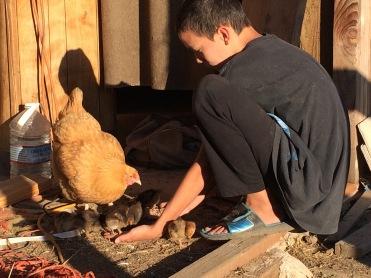 Ryan teaching the chicks to trust him